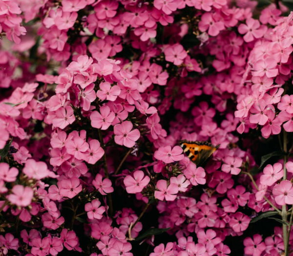 Çiçekler Susuz Kalmasın !